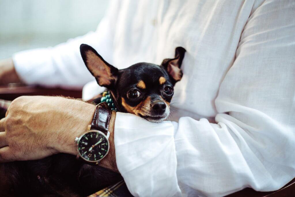 dog, pet Used on: Fine Homes